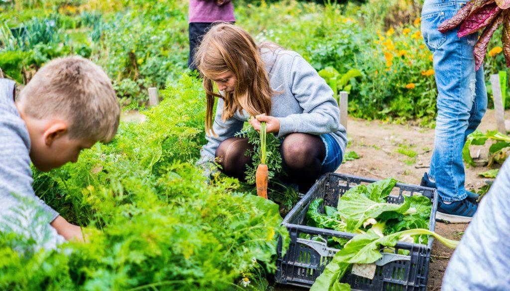 Frederiksbergs børn får nu skolehaver
